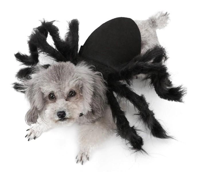 Костюм паука для питомца